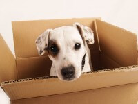 כלב בתוך אריזה