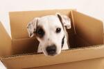 כלב בתוך ארגז הובלה